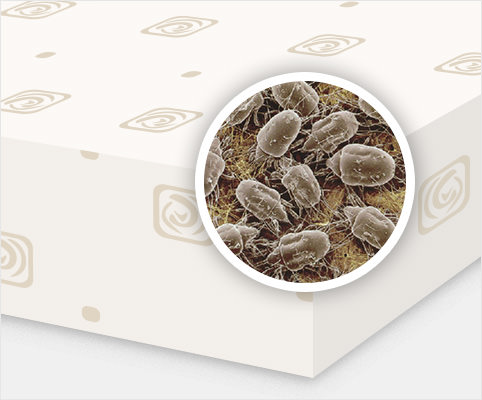 Mattress protectors help prevent the build up of dust mites and allergens